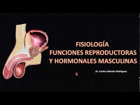 Fisiología Aparato Reproductor Masculino parte 1 (DrVale)