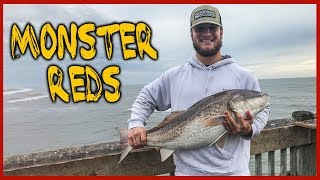 Big Georgia Redfish Channel Bass Fishing