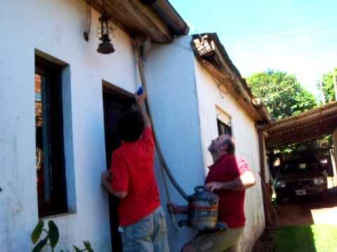 Las consecuencias de eliminar avispas doovi - Eliminar aranas en casa ...