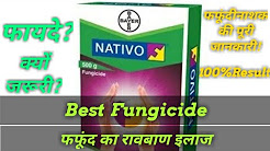 Popular Videos - Fungicide & Bayer - YouTube