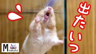 チーズJr.くん の可愛いパーカー hoodie on sale https://up-t.jp/info....