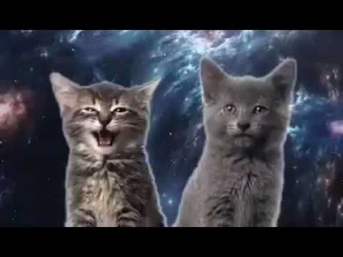 LOL - Cat Space Mix (Singing Cats)