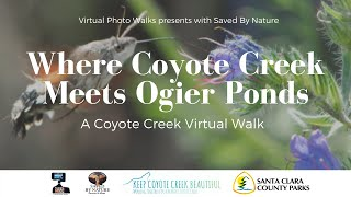 KCCB Session #7 Where Coyote Creek Meets Ogier Ponds with Saved By Nature, Bioblitz.club & SCCP