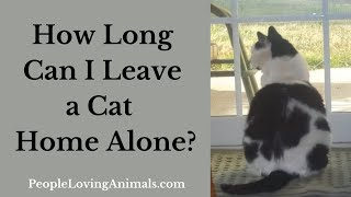 How Long Can I Leave a Cat Home Alone?