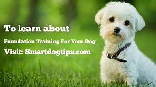 Foundation Training For Your Dog