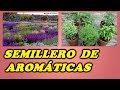 Semilleros de plantas aromáticas,ornamentales de jardín y trepadoras  //Destacados // Siembra