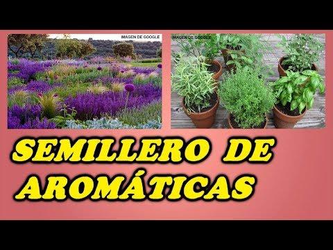 semillero-de-plantas-aromáticas-//-todo-huerta-y-jardín