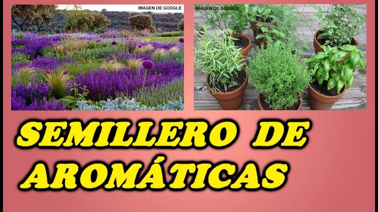 Como hacer semilleros de plantas arom ticas ornamentales for Jardin de plantas aromaticas