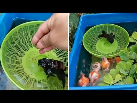 Man Finds Creative Way To Feed Blind Fish