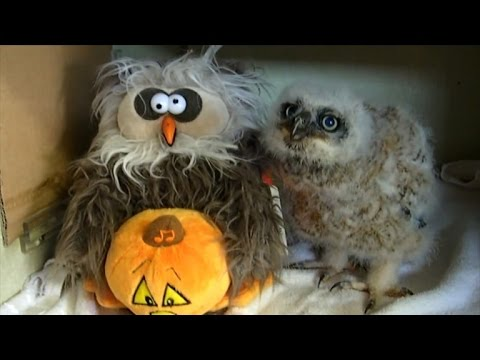 Rescued Baby Owl Dancing to 'Monster Mash' Will Make You Smile
