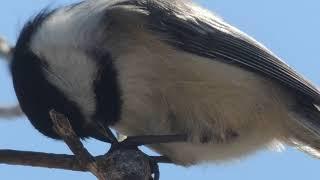 Au Relais des Mésanges, les oiseaux vous disent BON PRINTEMPS