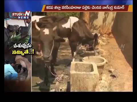 ITI Student Dairy Farming Success Story In Kadapa District   Studio N