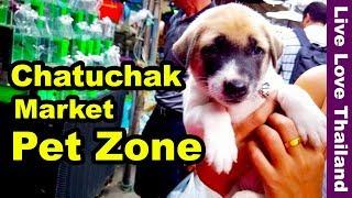 Chatuchak Weekend Market Pet Zone Livelovethailand