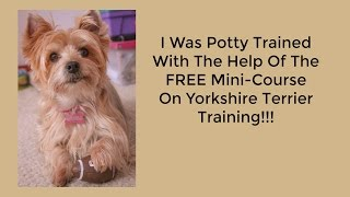 **Yorkie Potty Training Problems** Free Mini-Course On Yorkshire Terrier Training :) :)