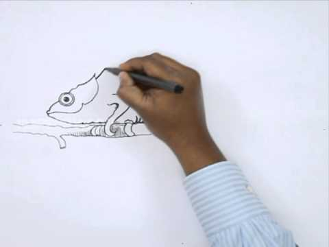 how to draw a real chameleon