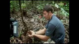Deadly 60 - Goliath Bird Eating Spider