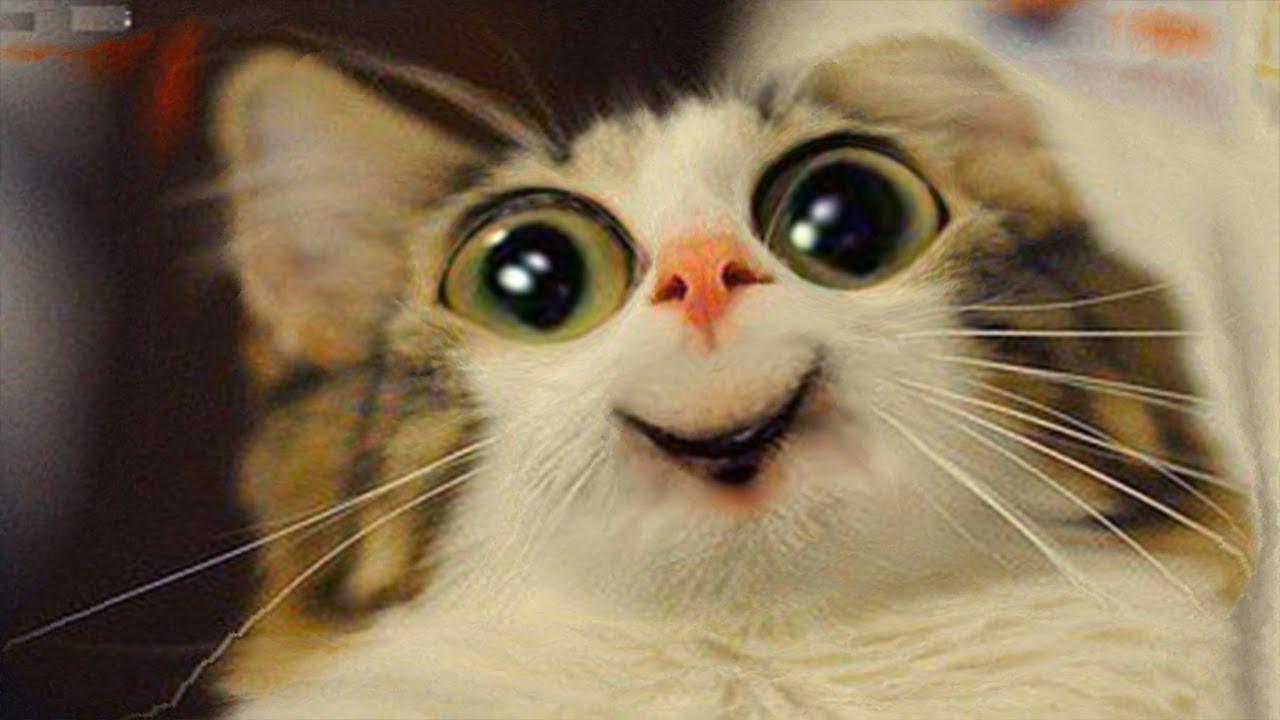 Смешные Животные Смотреть через Ютуб |  Я Ржал Пол Часа/Смешные Животные, Коты Собаки