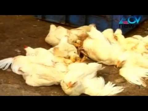 Corporation Takes Action Against Illegal Meat Shops In Trivandrum