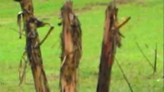 Aboriginal Spear Throwing at Rainforestation Kuranda Queensland Australia