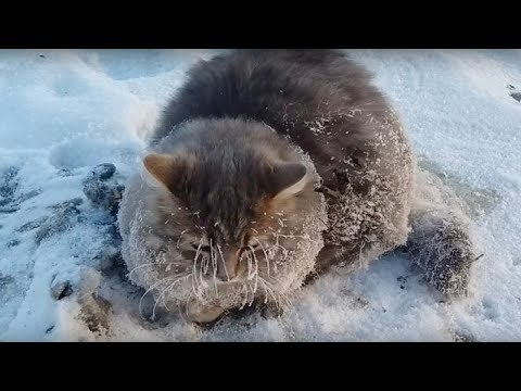 Couple Spot A Cat Unable To Move  Then They See Her Paws Frozen To The Ground