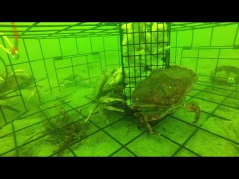 Crabbing In Hood Canal, Seabeck WA With A GoPro