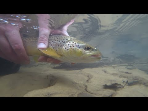 Wisconsin Trout Fishing - 1/4/2020 WI Opener