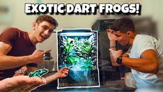 my-dart-frog-terrarium-is-finally-done