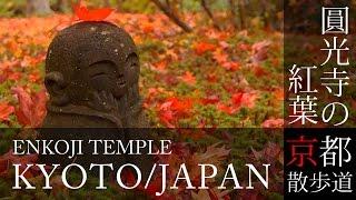 京都観光 一乗寺 圓光寺の紅葉(Autumn leaves of Enko-ji temple in Kyoto,Japan) / 京都散歩道