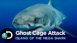 great white attacks ghost cage   island of the mega shark