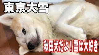 grandchild and German Shepherd dog 数年ぶりの東京大雪です、交通機関...