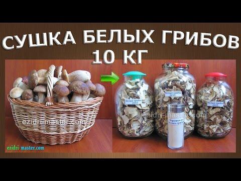Как сушить белые грибы в электросушилке? Приготовление грибного порошка