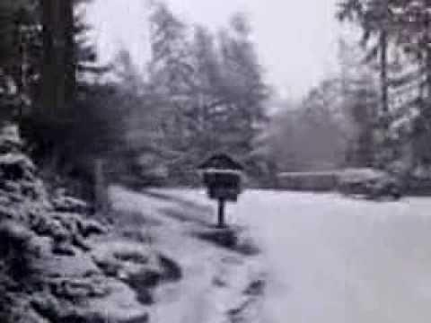 Snowy in Oak Harbor (Winter 2010-2011)