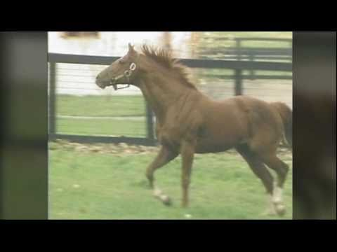 SECRETARIAT - Heart Of A Champion