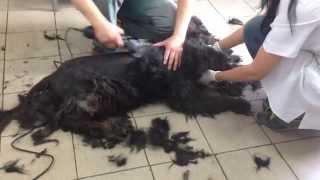 Стрижка собак в харьковском Центре содержания животных