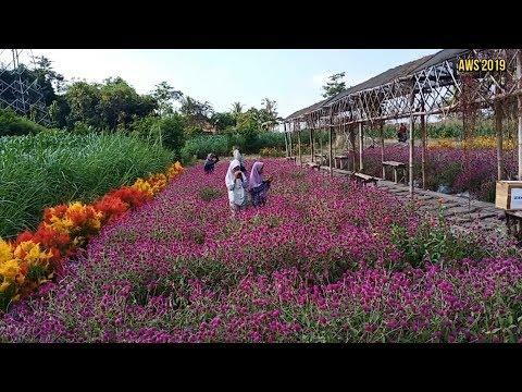taman-bunga-bono- -bono-park-tulung-klaten- -jawa-tengah- -indonesia