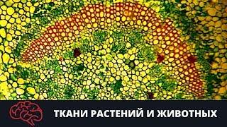 Ткани растений и животных Подготовка к ЕГЭ Подготовка к ОГЭ