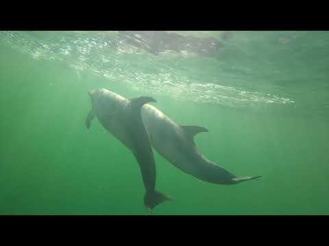 Pensacola Beach Dolphin Tour - 850-393-9055 www.fishflatout.com