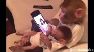 Tiktok Videosu İzleyen Maymun (Antep dublaj)