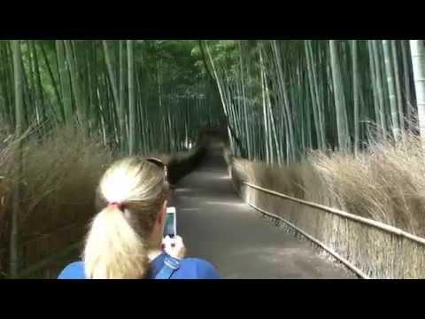 Tenryu-ji Temple, Sagano Bamboo Forest, Arashiyama