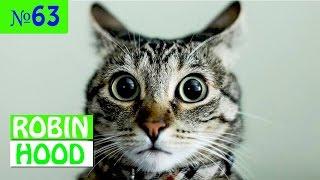 ПРИКОЛЫ 2017 с животными. Смешные Коты, Собаки, Попугаи // Funny Dogs Cats Compilation. Март №63