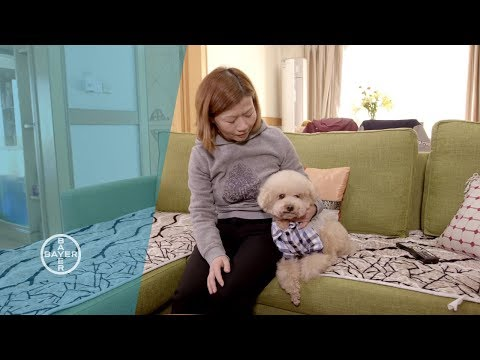 My Life with a Dog in Shanghai