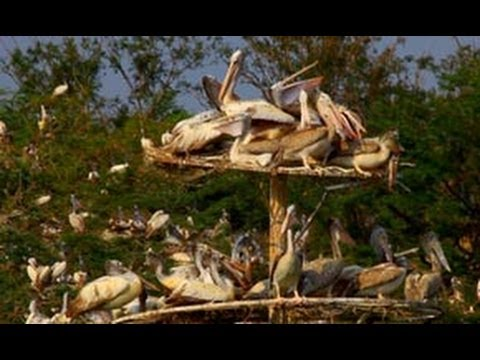 Uppalapadu Bird Sanctuary � favoured by migratory birds