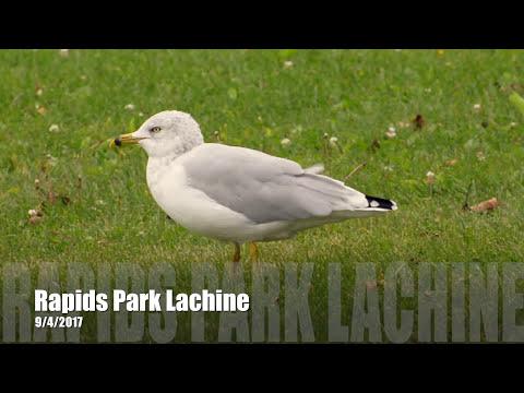 Rapids Park Lachine, Montreal - September 2017