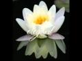 Download Angela Similea si Florin Piersic - Nufarul alb.flv
