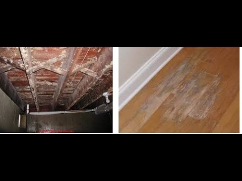How To Get Rid Of White Mold On Wood