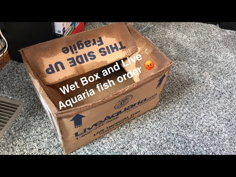 Unboxing A Fish From Live Aquaria!