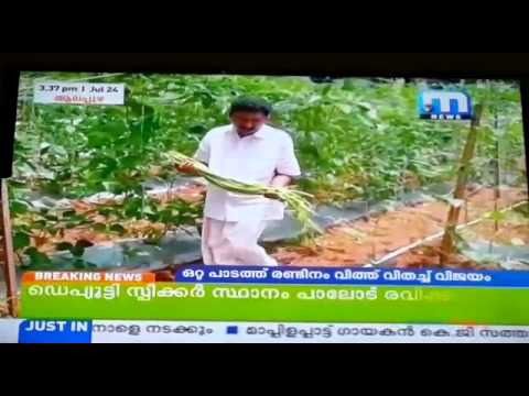 Ratheesh  [ Long Beans Cultivation:  Mathrubhumi TV News channel  ]