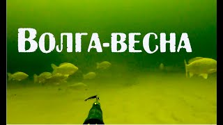 Охота на трофейную щуку на Волге Spearfishing in Volga