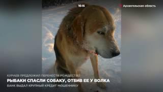 Рыбаки спасли собаку, отбив её у волка