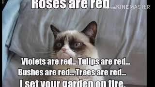 Rip Grumpy Cat (Best Of The Grumpycat Memes)